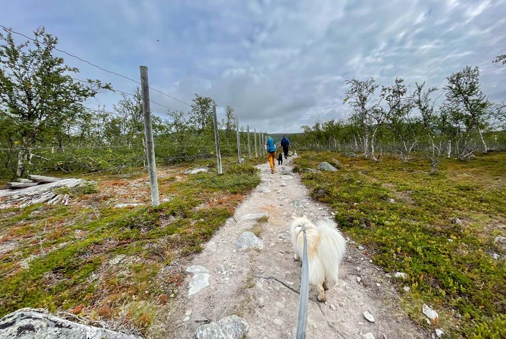 Lapinkoira Lyyti pääsi luonnonpuistoon ensimmäistä kertaa.